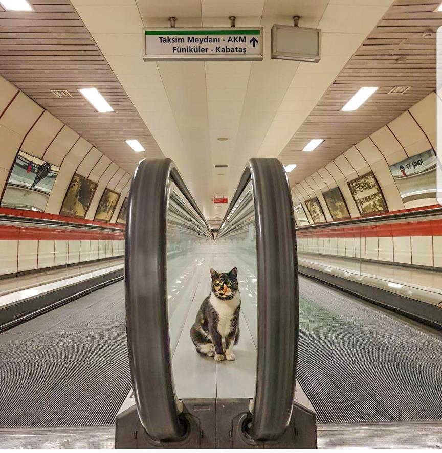 A metró macskája nem szívesen osztja meg helyét más macskákkal.